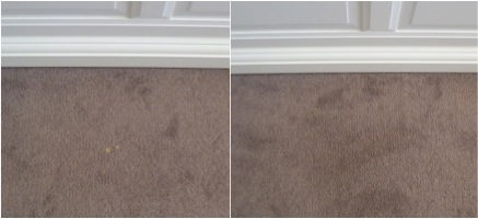 Carpet Stain Removal of Bleach Stains in a Sydney Home