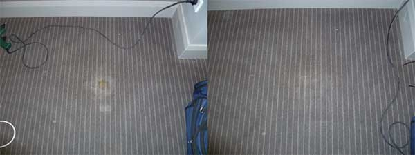 Commercial Carpet Repairs Sydney Carpet Stain Removal