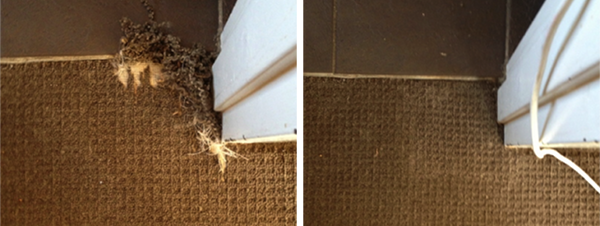 pet-damaged-carpet-bondi-beach-nsw-b&a