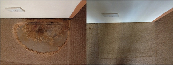 Cronulla NSW Carpet Repair of Water Damage to Carpet